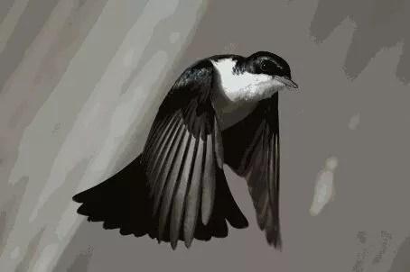 A BIRD STEALS IYAWO'S BABY 1