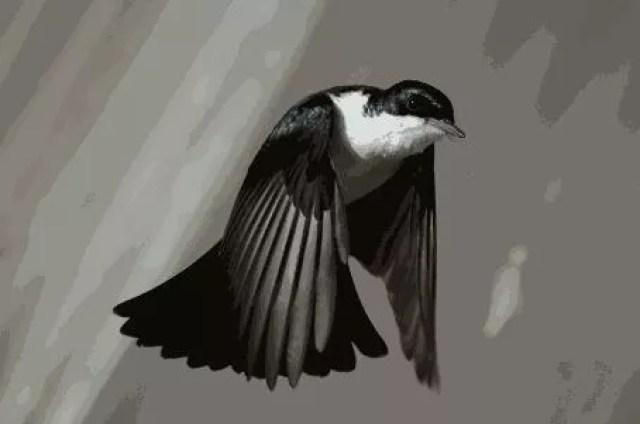A BIRD STEALS IYAWO'S BABY 2