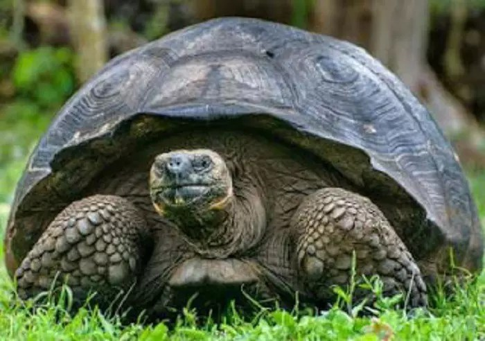 THE TORTOISE AND THE WISDOM OF THE WORLD 2