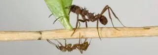 LESSONS FROM THE LIL CRAWLERS (ANTS) - BY VICTOR AFOLABI 1