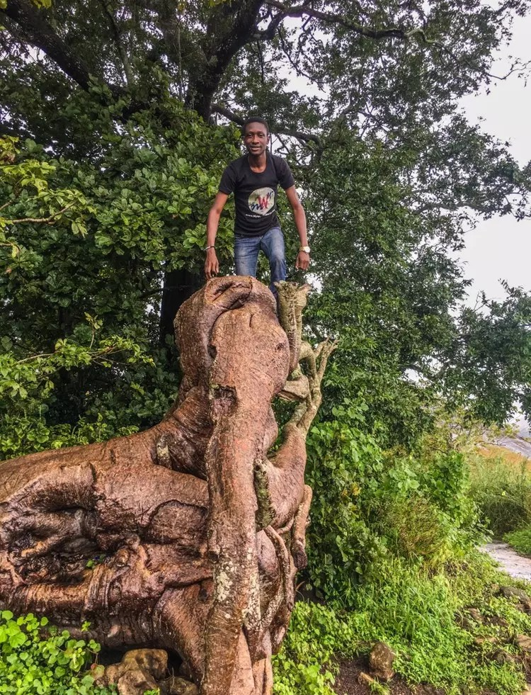 On top of elephant tree