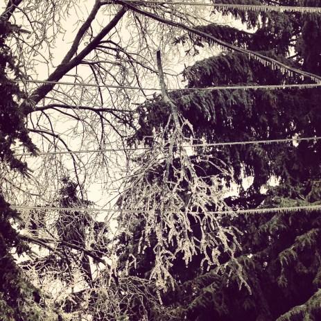 Branches skewering power lines
