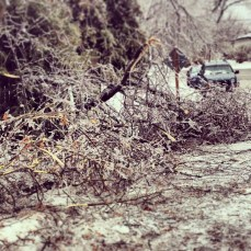 Tree limbs littered along the road
