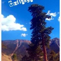 monthly challenges recap: june edition