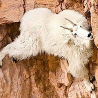 day 2: I'm a mountain goat