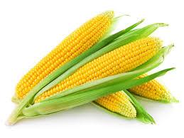 jagung,