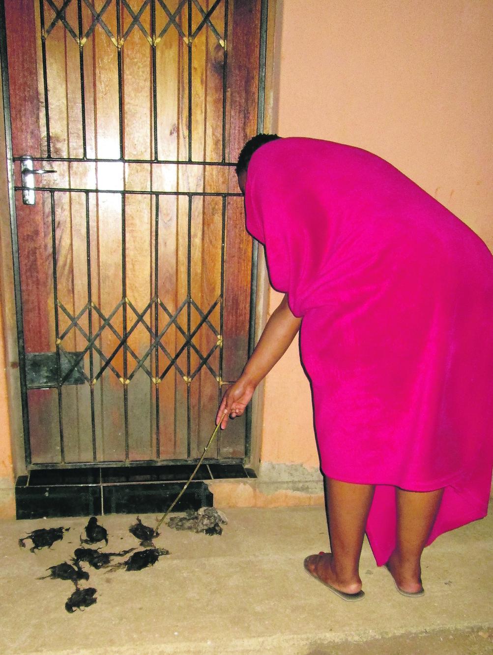 Black Dead Chicks Bad Luck On Our Doorstep Mzansi