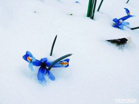 April Snow, photo by mzrosie