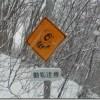 たぬきに注意(道路標識)