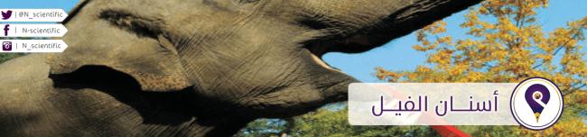 أسنان الفيل