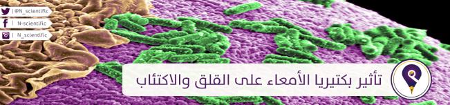 بكتيريا. أمعاء