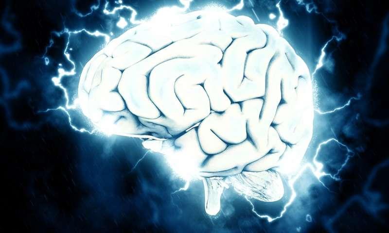 دماغ/brain