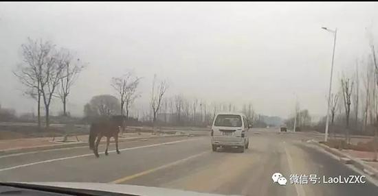 男子邊駕車邊喝酒還「遛馬」 涉嫌醉駕被刑拘[圖]