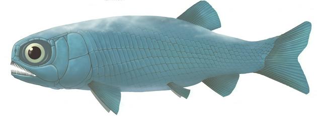 圖5。 亞洲肋鱗裂齒魚復原圖 (許勇 供圖)
