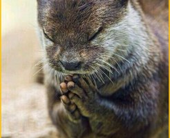 お祈り カワウソ