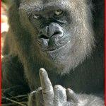 【ゴリラ絶滅危機!】国際自然保護連合のレッドリストに指定…その原因とは?