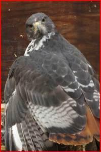 コンドル 鳥