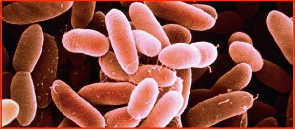 リステリア菌 食中毒