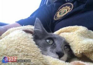 Beware of Sheltering Animals