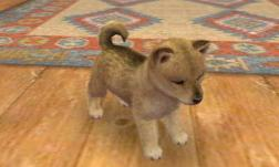 nintendogs__cats-6