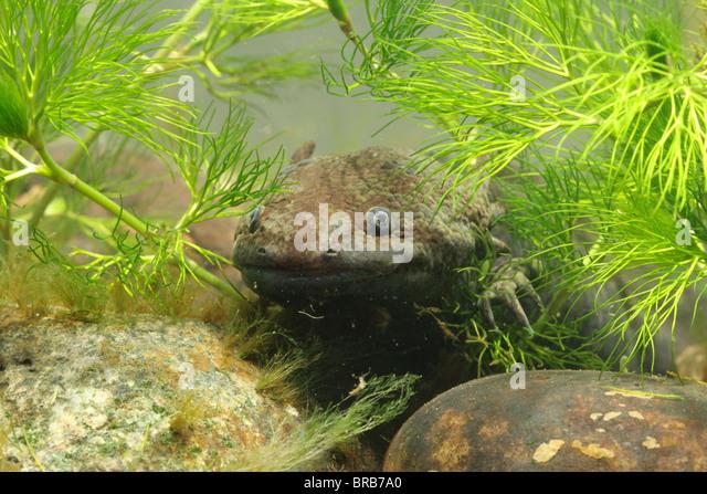 Aquarium Plants Vancouver