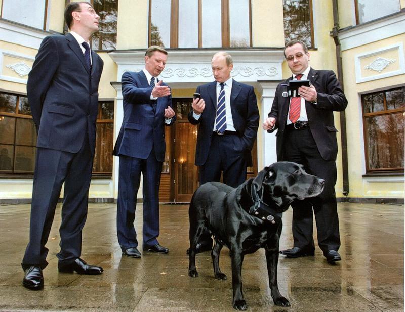 Лабрадор Путина