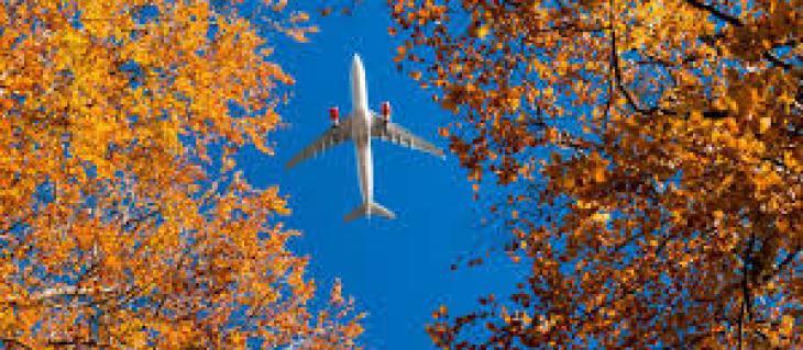 Польза сезонных и экзотических фруктов для организма