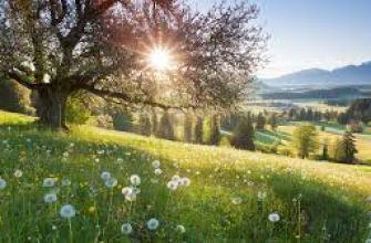 гавайские острова отдых