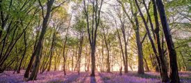 как избавиться от колорадского жука на картошке