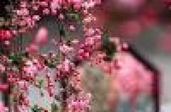 чем питается река