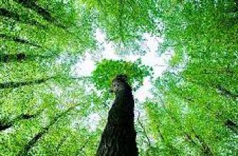 неизвестные факты о войне, интересный факт про войну