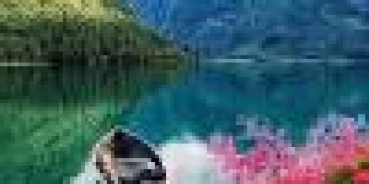 факты о кактусах, интересные факты о кактусах