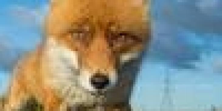 смешные фото про котов