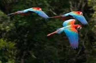 туризм в австрии, вена австрия достопримечательности