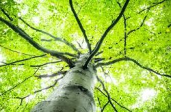 зачем мед пчелам