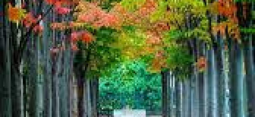 собака отпуск