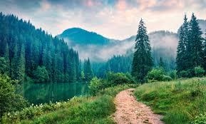 монастырский чай от алкоголизма, состав монастырского чая от алкоголизма