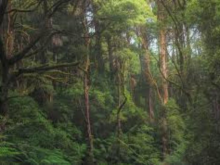 самая дорогая гостиница в мире, за сутки, цена