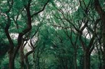 польза черного чая для организма, вред и польза, свойства, витамины, напиток