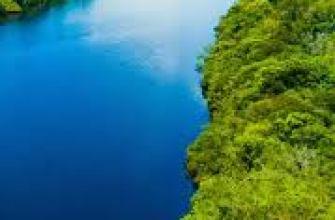 самая большая порода собак в мире, фото, мастиф, топ, алабай, факты