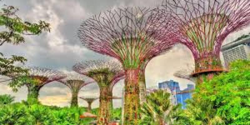 свойства черного чая, полезные, с молоком, листовой