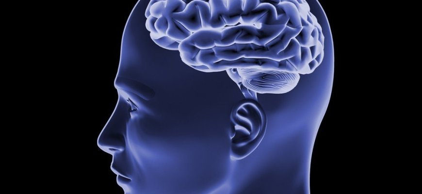 факты о мозге человека