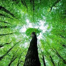 чем отличается алмаз от бриллианта, огранка, обработка, минерал