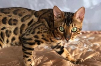 самое дорогое животное, в мире, цена, стоимость, фото