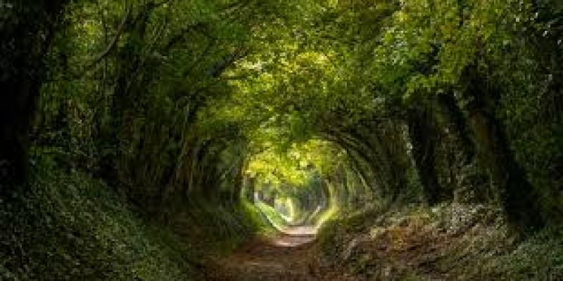 кольцо с бриллиантом виды, адамас, камень, золото, выбрать