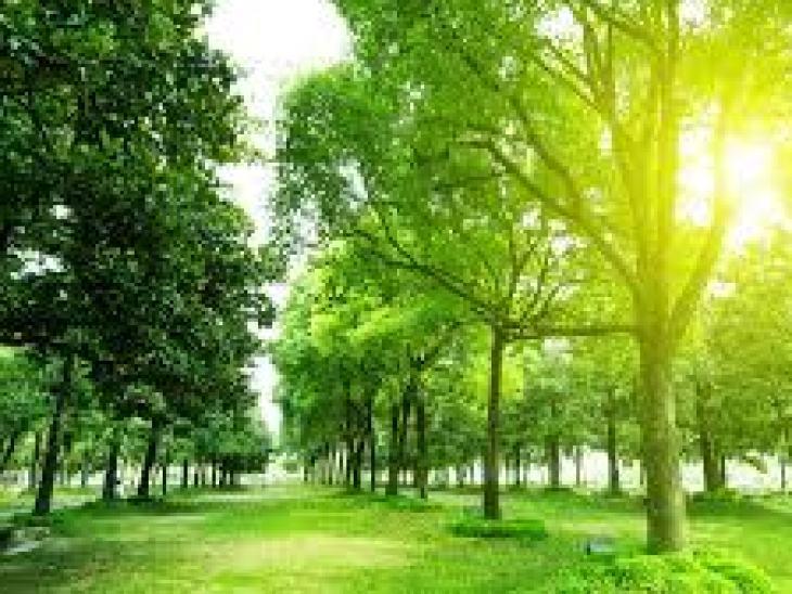 Польза и вред растворимого кофе: пить или не пить – узнаем правду