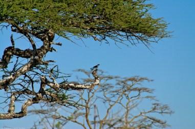 Tanzania-Serengeti_National_Park-010-DSC_5838