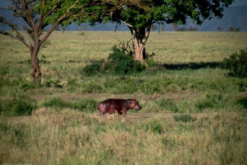 Tanzania-Serengeti_National_Park-023-DSC_5842