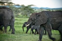 Tanzania-Serengeti_National_Park-036-DSC_5267
