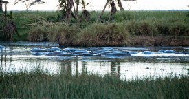Tanzania-Serengeti_National_Park-042-DSC_5256